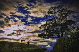 foal on the hill.... by Phil Darby